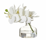 Rogue Phalaenopsis Glass Vase 19x15x19cm White-rogue-What's Cooking Online Store