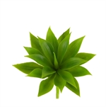 Rogue Agave Mini 12cm-succulents-What's Cooking Online Store