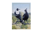 Maxwell & Williams Birds of Australia 10yr Anniversary Tea Towel 50x70cm Magpie-tea-towels-What's Cooking