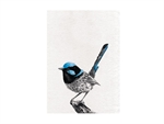 Maxwell & Williams Marini Ferlazzo Birds Tea Towel 50x70cm Superb Fry Wren-tea-towels-What's Cooking